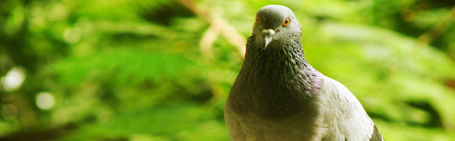 Reduce the risks of being negatively impacted by Google Pigeon by following our tips below